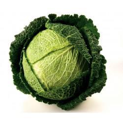 "Savoy Cabbage Seeds ""Iron Head"""