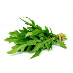 Semi di ruchetta – rucola (Eruca sativa)