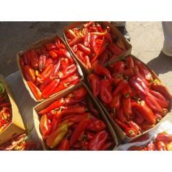 Sweet pepper Seed KURTOVSKA KAPIJA