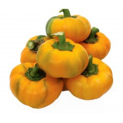 Sweet Pepper Seed ROTUND Yellow