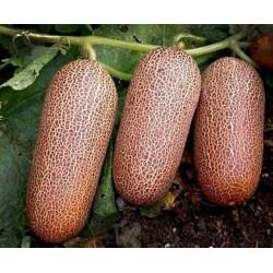 Sementes de Pepino Poona Kheera