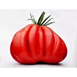 Tlacolula Ribbed Heirloom tomato Seeds