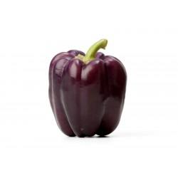 VIOLETTA Violet pepper Seeds