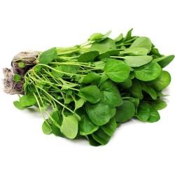 Källfräne Frön, Vattenkrasse - medicinalväxt