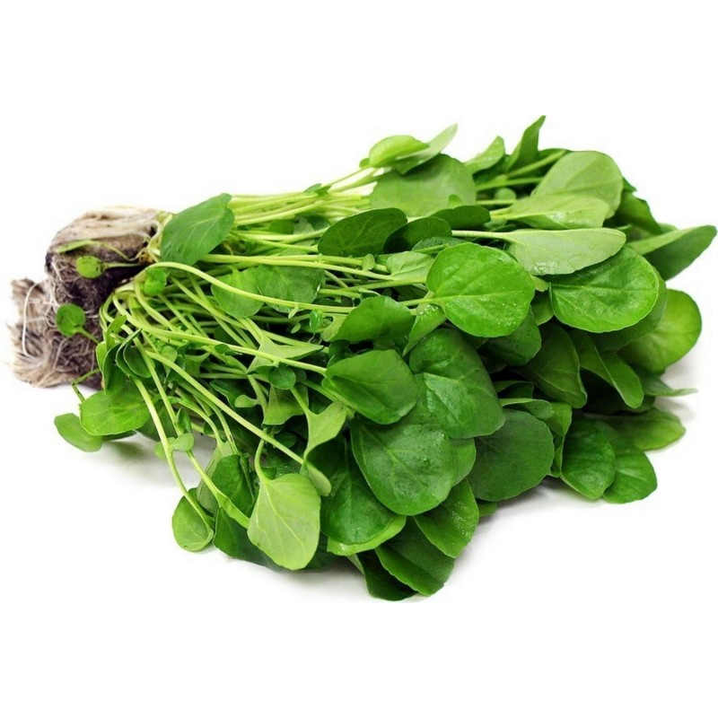 Watercress Seed - Medicinal plant