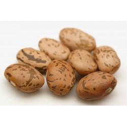 """Pinto"" Bean Seeds (Phaseolus vulgaris)"