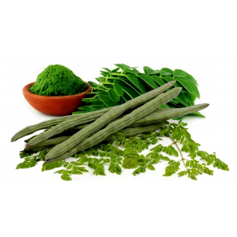 Moringa the Miracle Tree Seeds (Moringa oleifera PKM 1)
