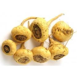 Maca Seeds (Lepidium meyenii)