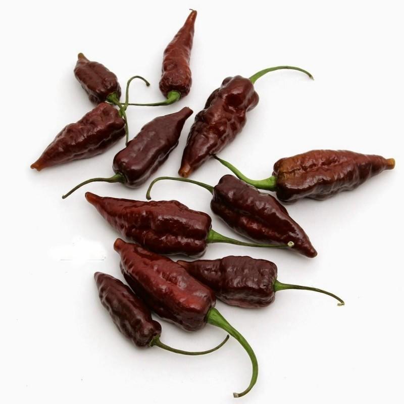 "Chili Seme ""FATALII Choco"""