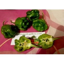 Semi di Peperoncino Habanero Green - Verde