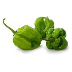 Sementes de Pimenta Habanero Green -  Verde