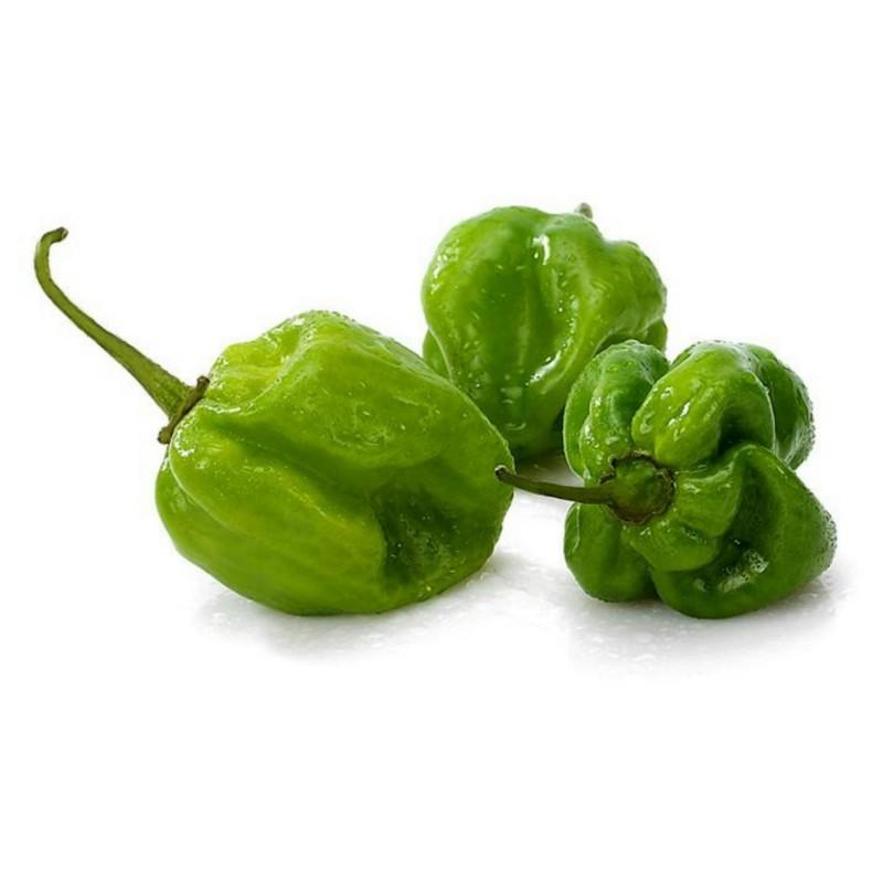 Green Habanero Seme