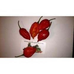 Habanero Naga Morich Seeds