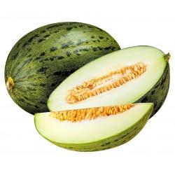 Piel de Sapo Dinja Seme (Cucumis melo)