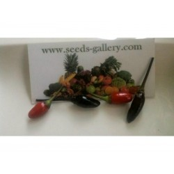 Orozco Chilli Pepper Seeds