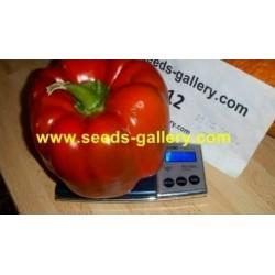 Rote Riesen Monster Paprika Samen