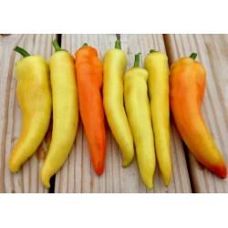 Sweet Pepper Sweet Banana Seeds