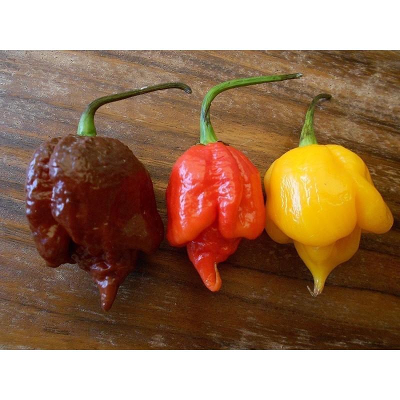 Sementes de Pimenta Trinidad Scorpion Vermelho e Amarelo 1,5 mill. SHU