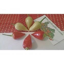 Σπόροι Τσίλι πιπέρι Λευκό ΔΌΡΥ