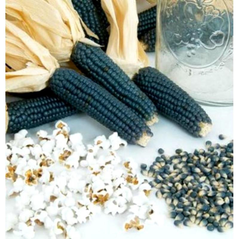 Semi di Popcorn Blu