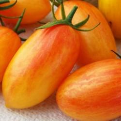 Sementes De Tomate ARTISAN BLUSH TIGER