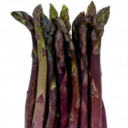 Asparagus Seeds EARLY ARGENTEUIL