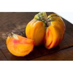 Beefsteak Tomato BIG RAINBOW Finest Seeds