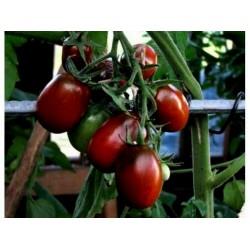 Black Plum Tomato Seeds