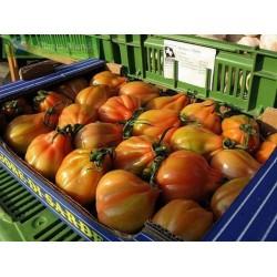 Graines de Tomate CHARLIE CHAPLIN