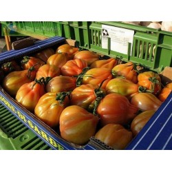 Sementes De Tomate CHARLIE CHAPLIN