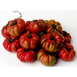 COSTOLUTO GENOVESE Tomato Seeds