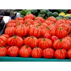 Italian CUORE DI BUE Tomato Seeds