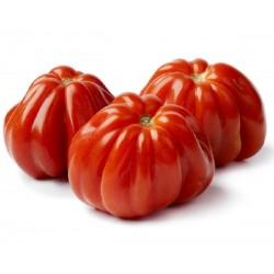 Graines de Tomate italien COEUR DE BOEUF