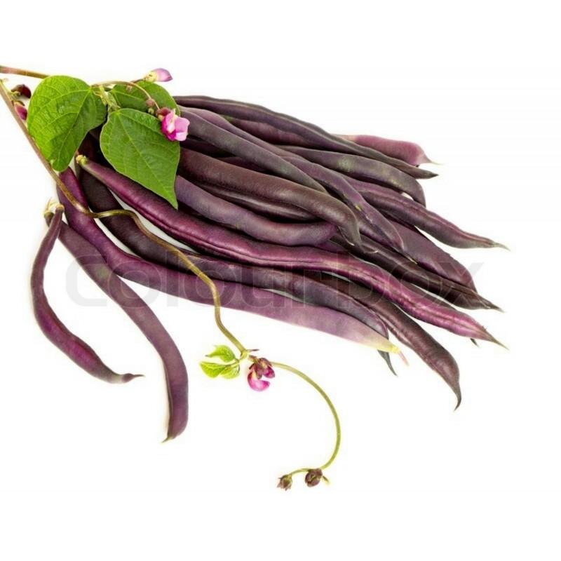 A Cosse Violette Stangenbohne Samen