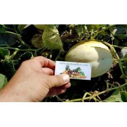 Semi Di Melone bianco SNOW LEOPARD - MOLTO RARO