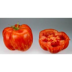 STRIPED STUFFER Tomatensamen