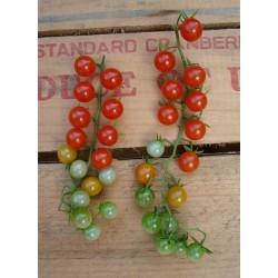 Sementes de tomate SWEET PEA CURRANT