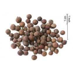 Allspice Graines (Pimenta dioica)
