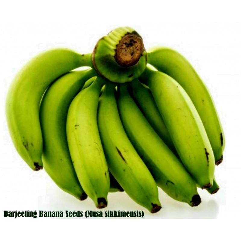 Darjeeling Banana Seeds (Musa sikkimensis)