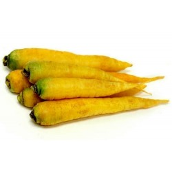 Graines (14000 graines) De Carottes Solar Yellow
