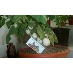Sementes De Planta Dos Ovos