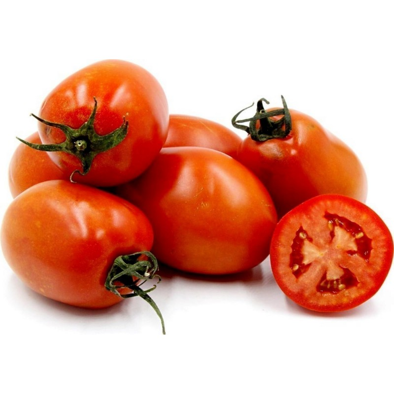Semi di pomodoro ROMA NANO