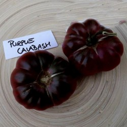 Purple Calabash Tomatensamen