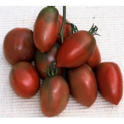 Sementes De Tomate PURPLE RUSSIAN - UKRAINIAN PURPLE
