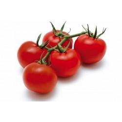 Semi di Pomodoro GRAPPOLO