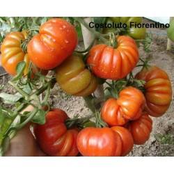 Σπόροι Τομάτας beefsteak COSTOLUTO FIORENTINO