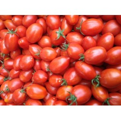 Fiaschetto Tomaten Samen