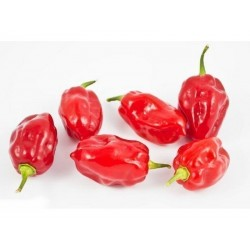 Habanero Tobago Seasoning Chili Samen