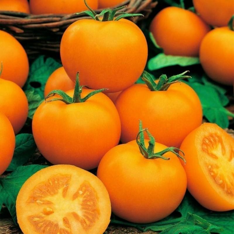 Graines de Tomate Goldene Königin