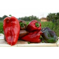 """Elephant's Ear"" Sweet Pepper Seeds"